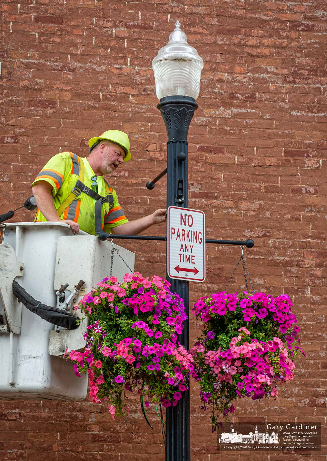 An electrician makes repairs to a light pole bearing the city's hanging basket petunias on East Main Street as the Uptown Improvement Projects continues toward an early completion date. My Final Photo for June 18, 2020.
