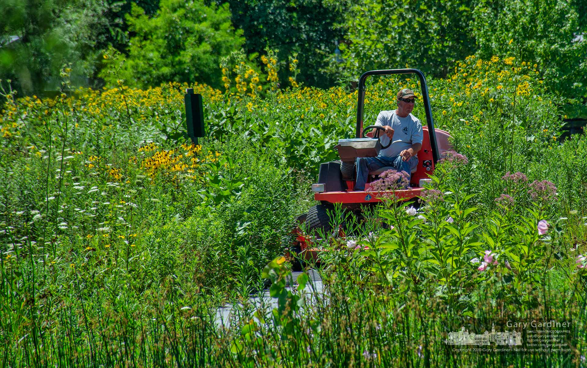 A groundskeeper for Westerville Parks and Recreation mows narrow strips of grass along the edge of the small prairie filled with flowers at the wetlands at Highlands Park. My Final Photo for July 28, 2020.