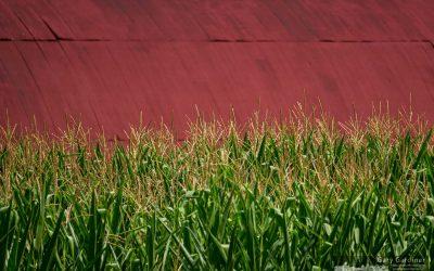 Braun Barn And Corn Crop