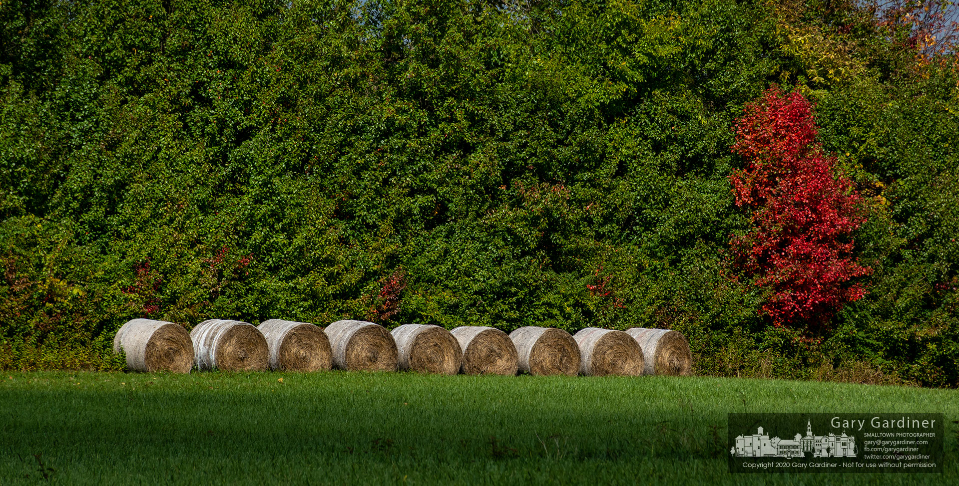 Rolls of hay are punctuated by a single tree showing fall colors on the fenceline of the Braun Farm. My Final Photo for Oct. 5, 2020.