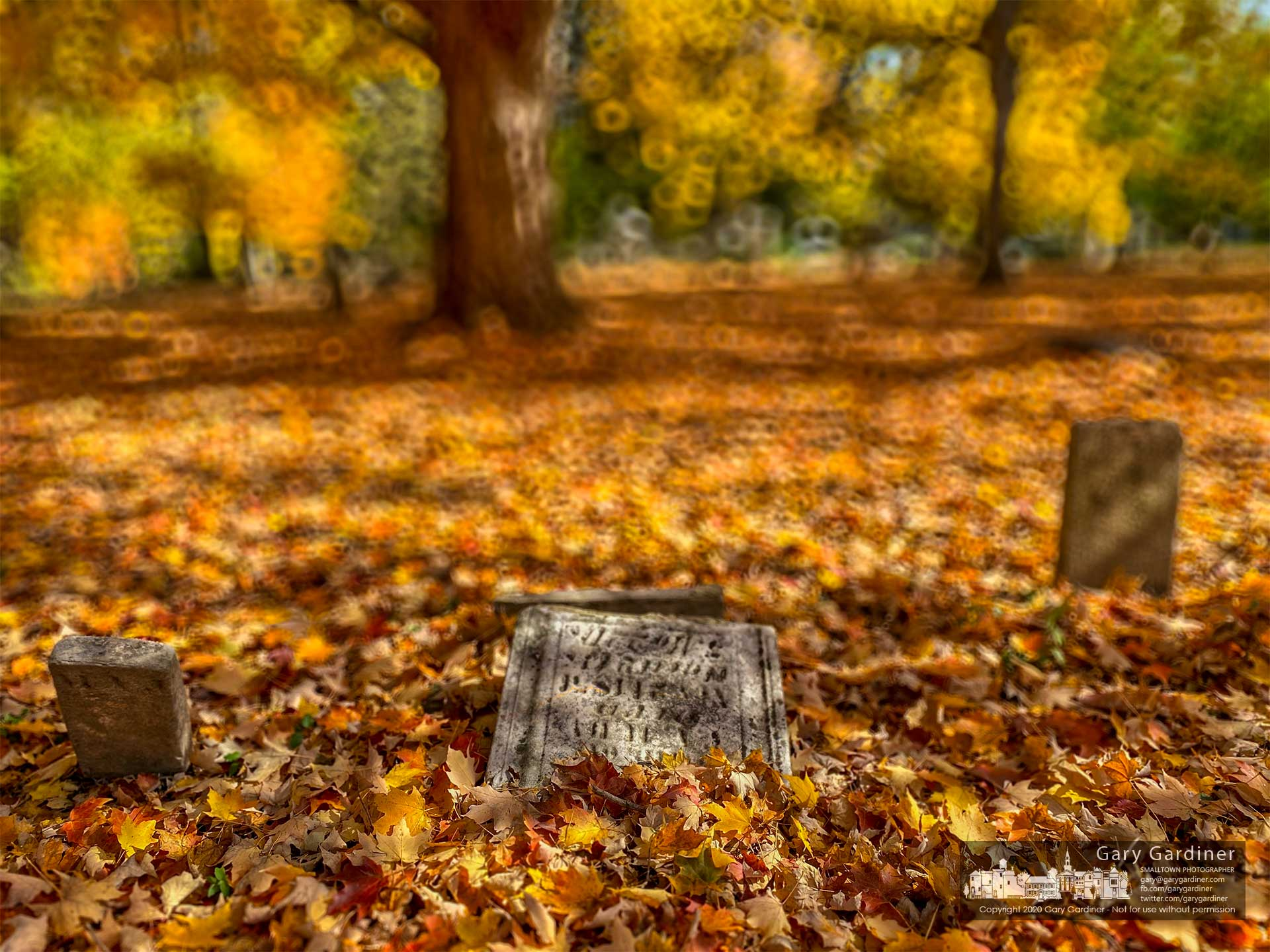 Headstones at the Olde Methodist Cemetery lie under a carpet of golden maple leaves. My Final Photo for October 23, 2020.
