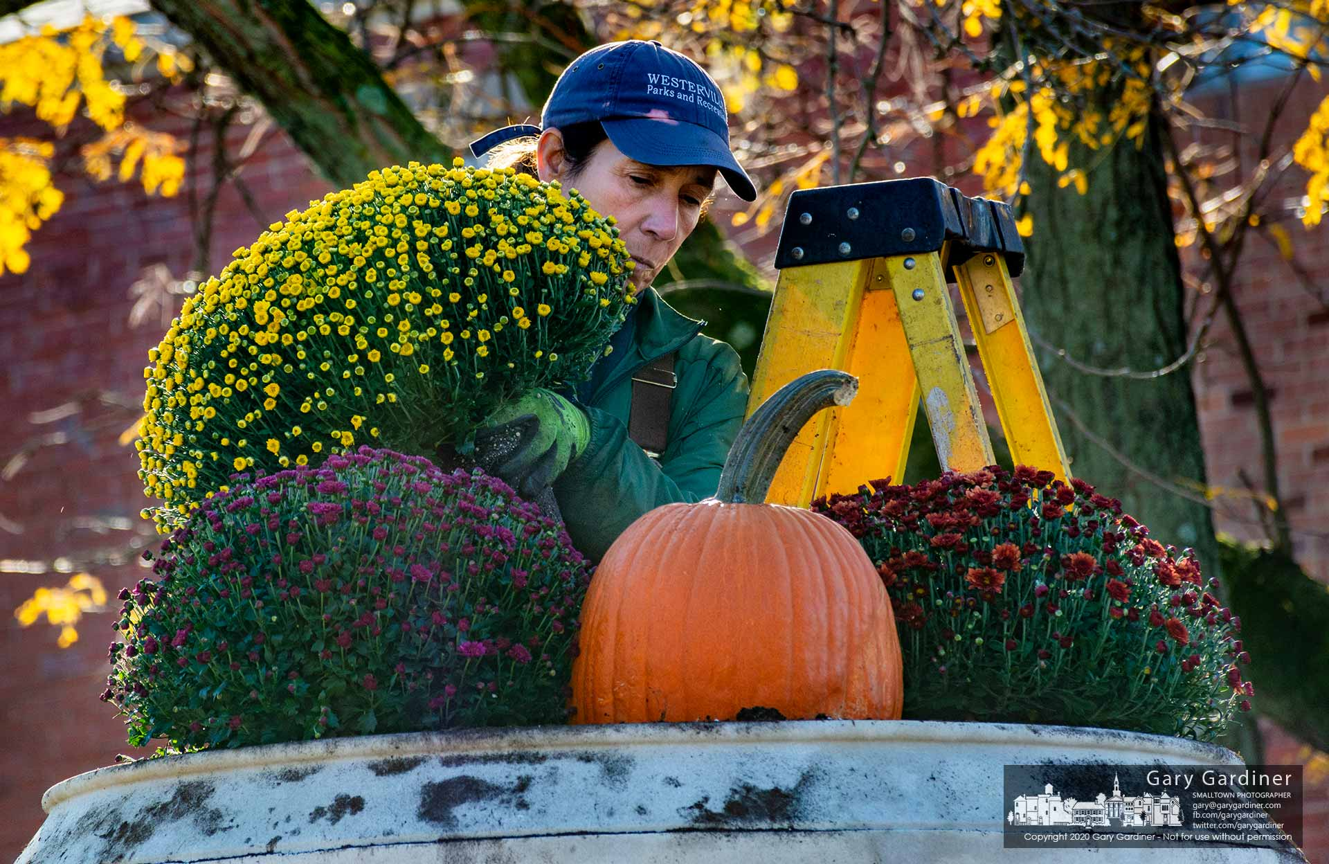 A Parks and Recreation worker install pumpkins and chrysanthemums in the planter in Rotary Park at State and Home Streets. My Final Photo for Oct. 16, 2020.