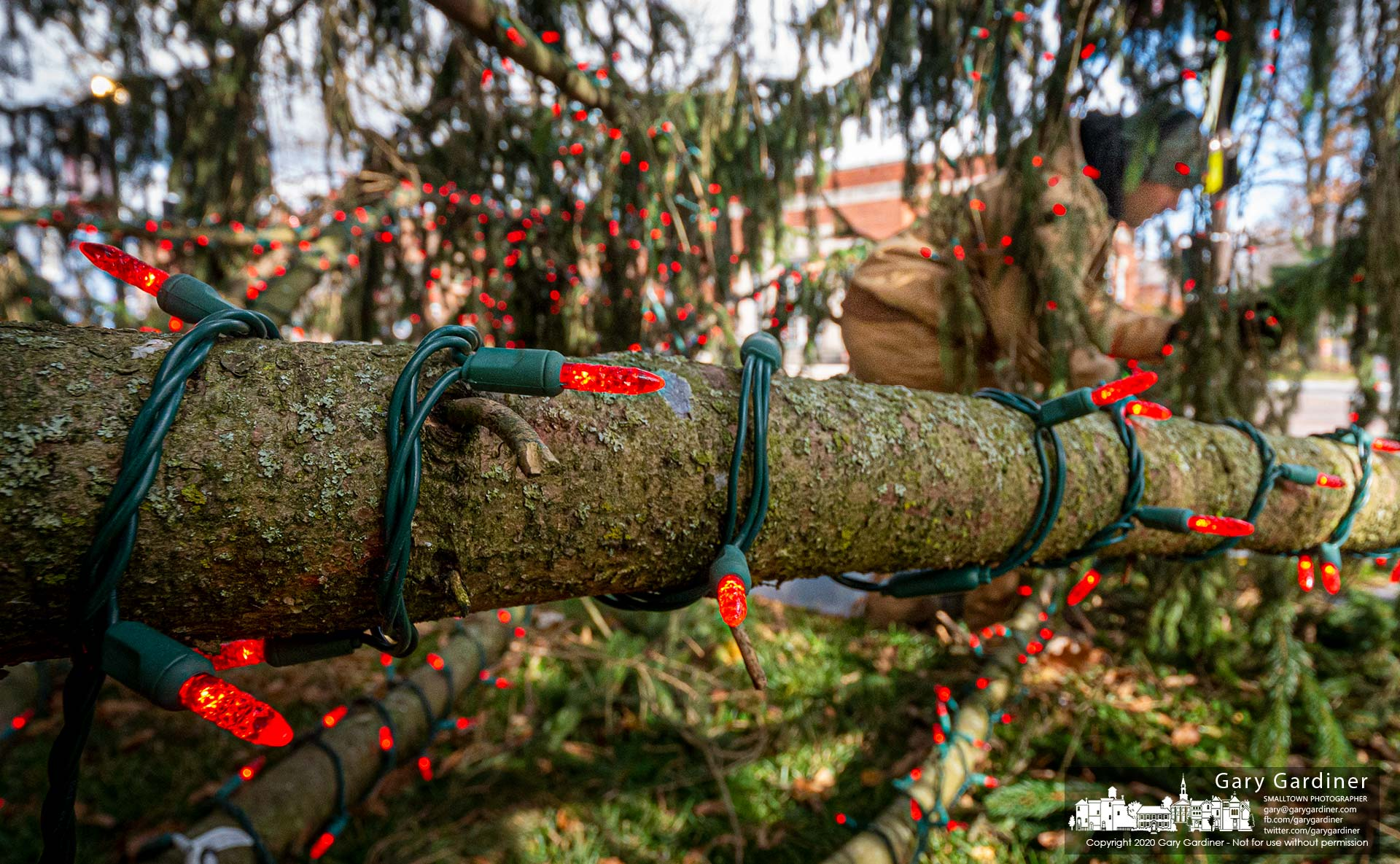 A city worker attaches red lights to the lower limbs of the holiday tree installed in front of city hall. My Final Photo for Nov. 17, 2020
