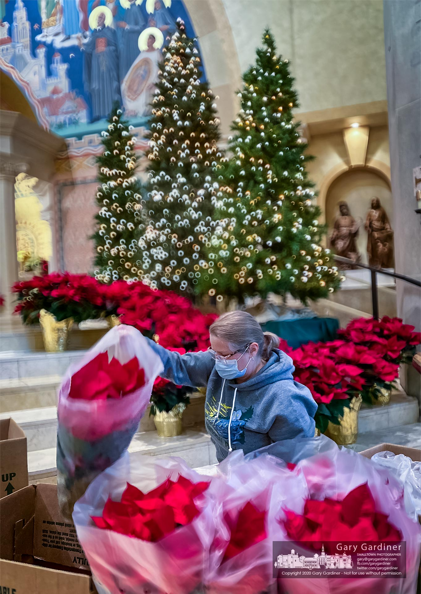 Volunteers place poinsettias in St. Paul the Apostle Catholic Church getting it ready for Christmas Day Masses. My Final Photo for Dec. 23, 2020.