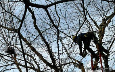 Tangled In Treetops