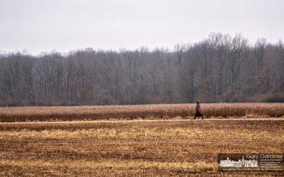 Sharon Woods Solitude