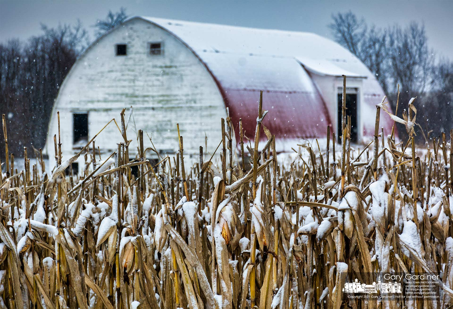 Snow continues to fall on the unharvested corn after an overnight storm brought a winter storm to the Braun Farm. My Final Photo for Feb. 1, 2021.