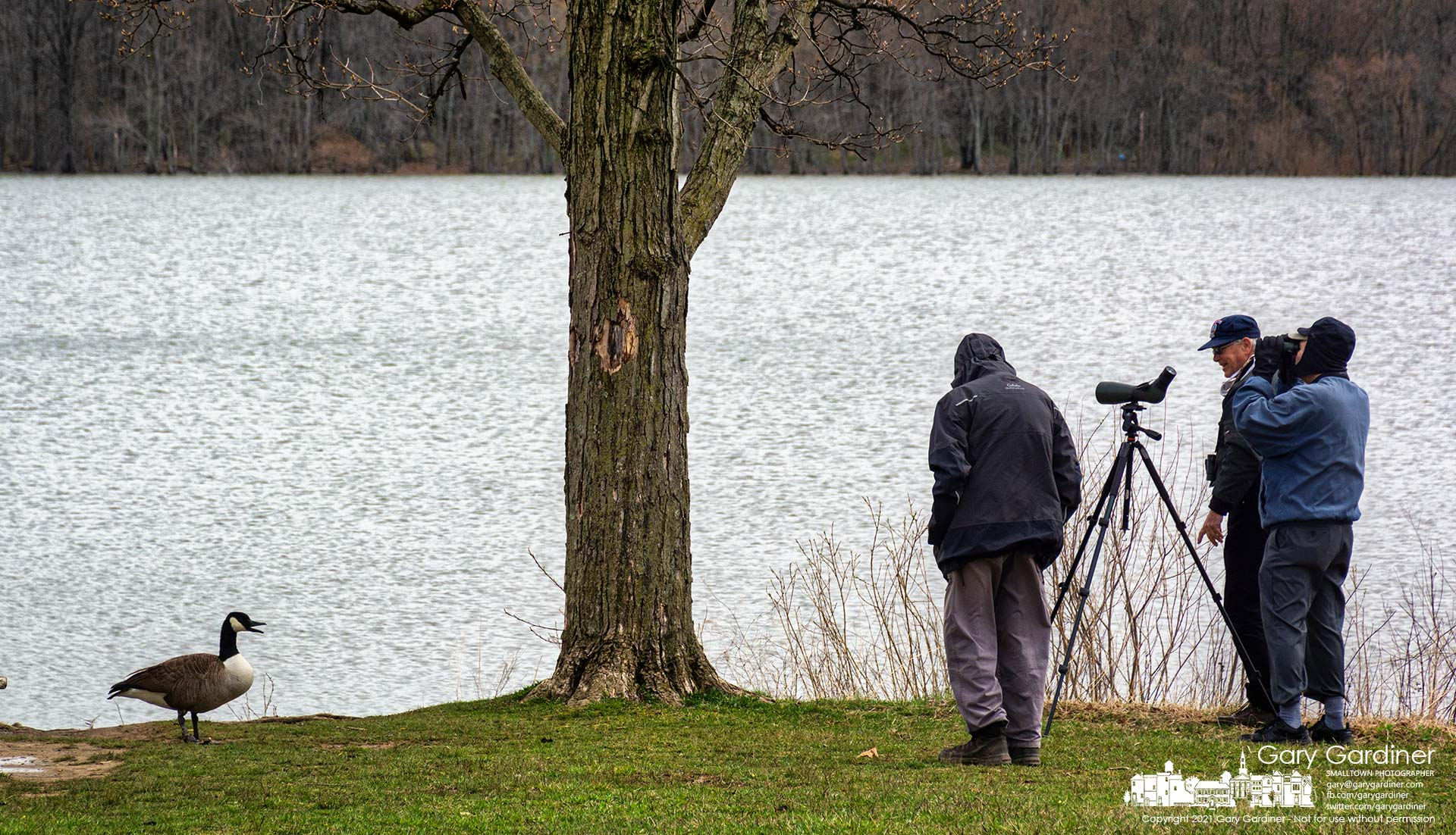 A Canada goose barks at a trio of birdwatchers observing the fowl floating and flying at Hoover Reservoir on a warm Spring morning. My Final Photo for March 31, 2021.