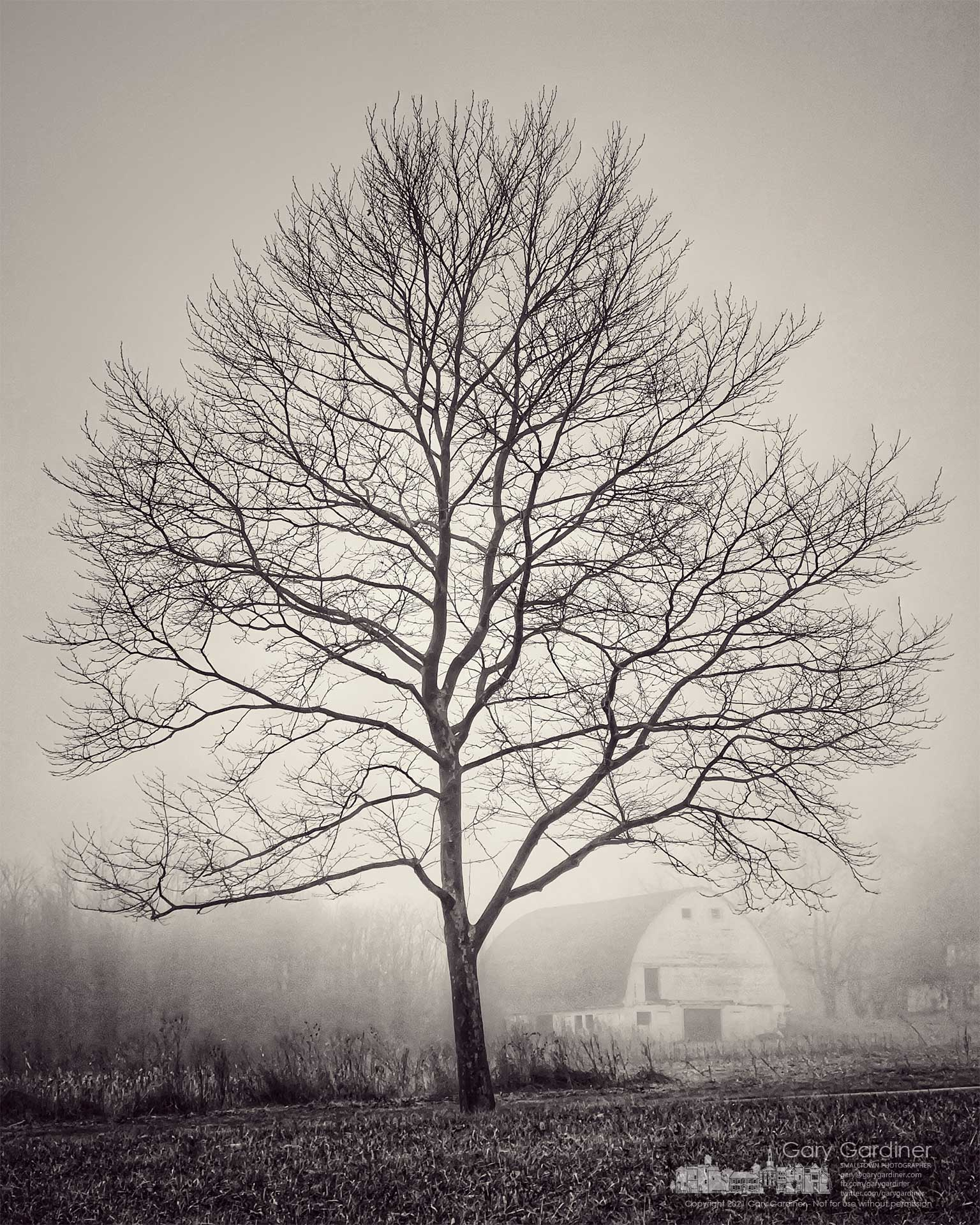 The bare trunk and limbs of a tree on Cooper Road mark the tones of a morning fog that shrouds the barn on the Braun Farm. My Final Photo for March 17, 2021.