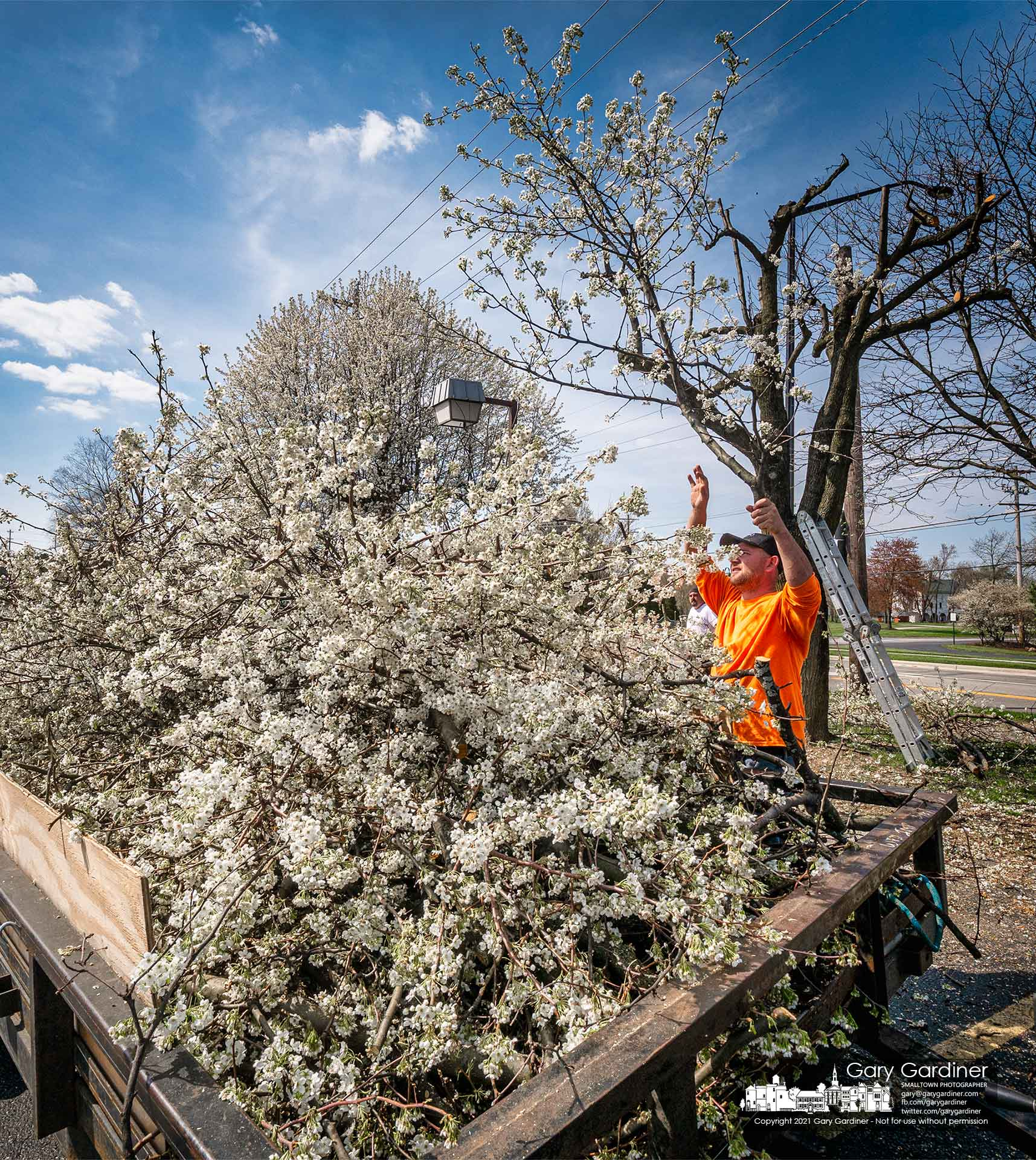 A tree trimmer tosses at blossoming limb from a Bradford pear being heavily trimmed into a hauling truck at the parking lot of a business on West Main. My Final Photo for April 6, 2021.