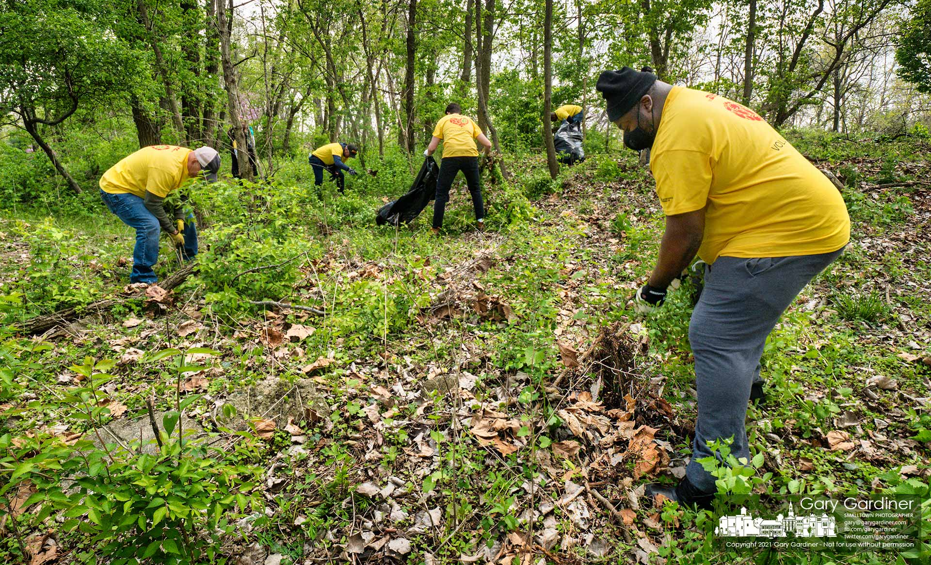 Volunteers from DHL remove invasive species honeysuckle and garlic mustard plants from a wooded section of Heritage Park. My Final Photo for April 23, 2021.