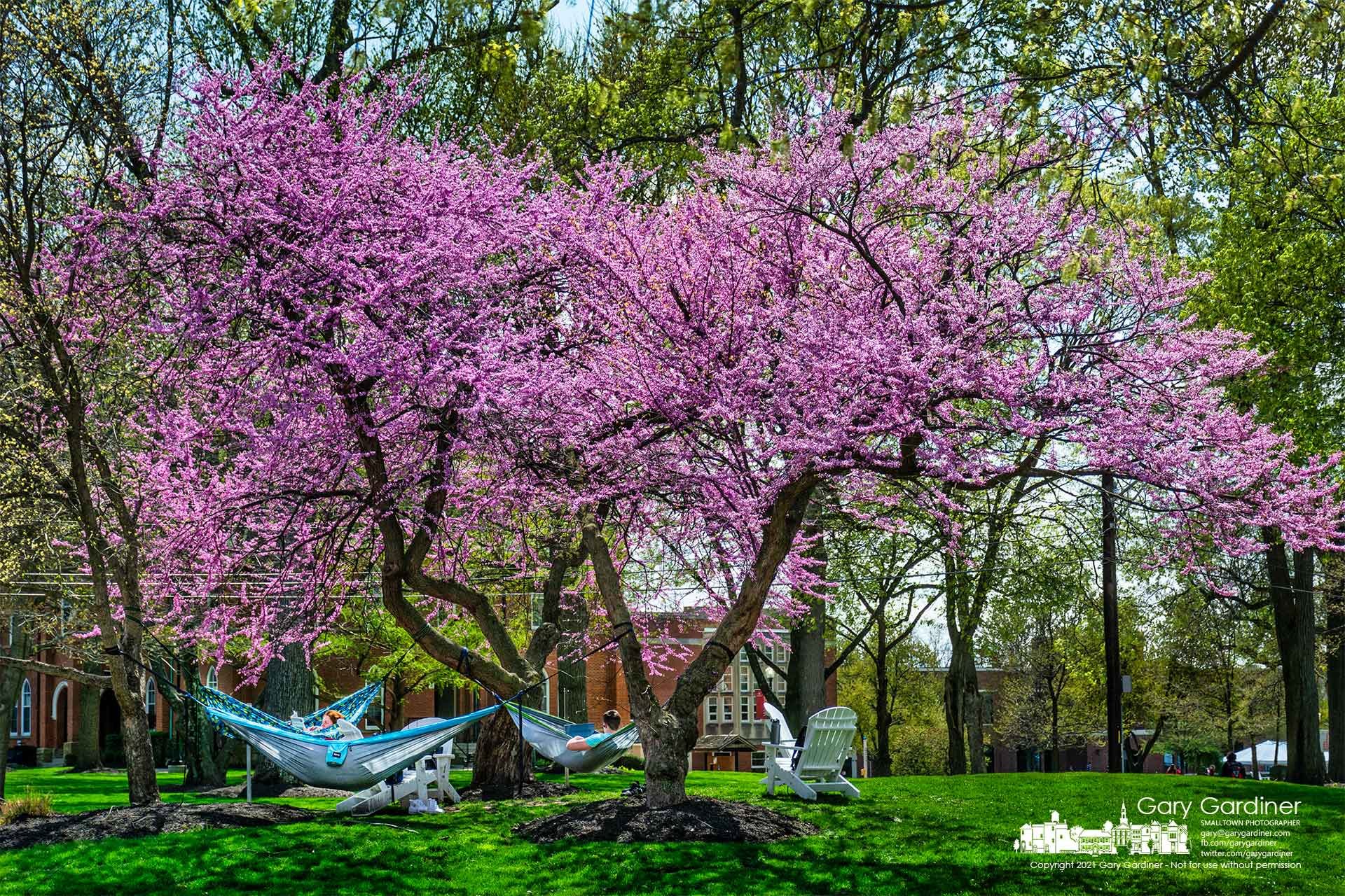 Otterbein students relax and study from hammocks secured to flowering trees at the corner of Grove and West Main. My Final Photo for April 14, 2021.