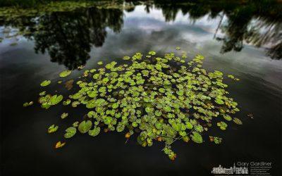 Highlands Wetlands Lily Pads