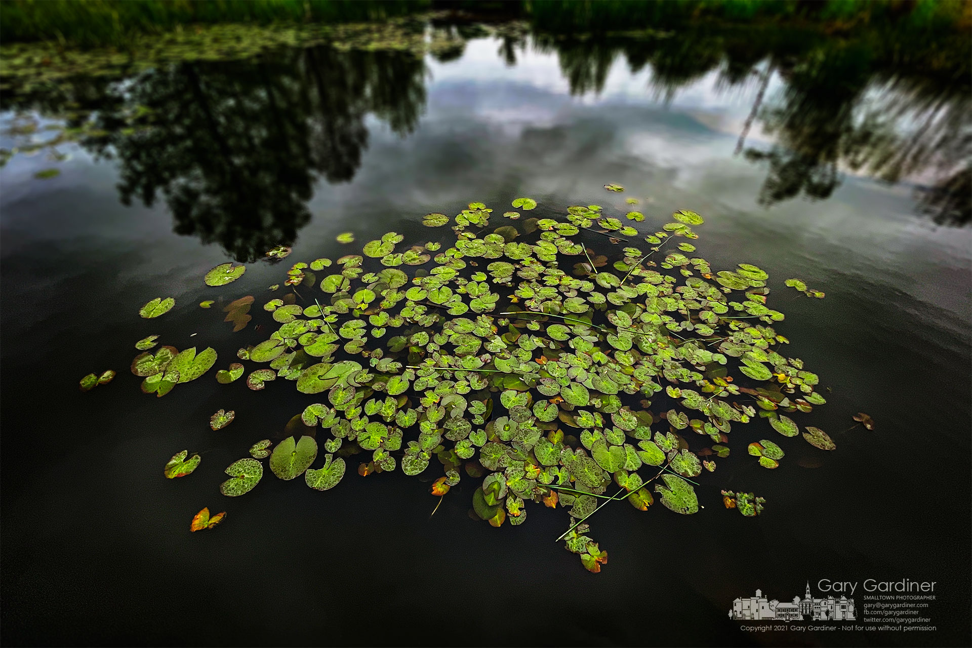 The early growth of lily pads on the wetlands at Highlands Aquatic Center wears a coating of raindrops after an overnight and morning rain. My Final Photo for May 3, 2021.