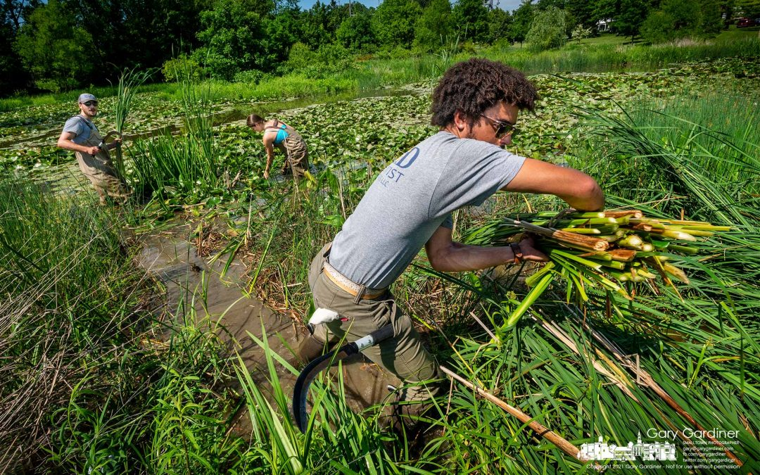 Cattail Crew Clears Congestion