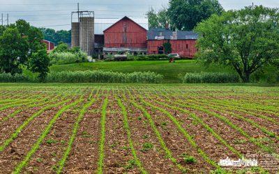 Corn Rows Acomin'