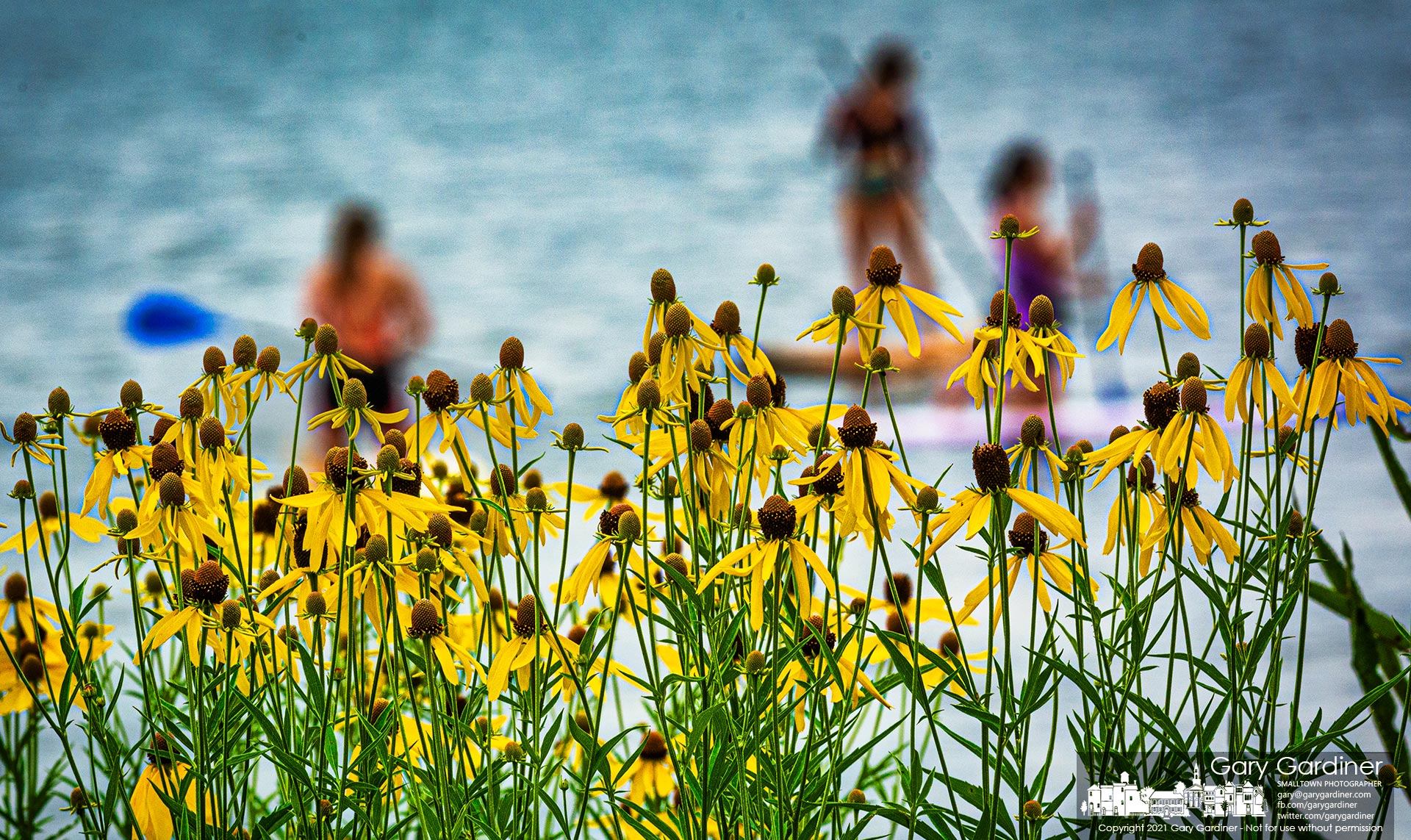 Paddleboarders on Hoover Reservoir pass by a field of wildflowers growing near the Walnut Street boatramp. My Final Photo for July 10, 2021.