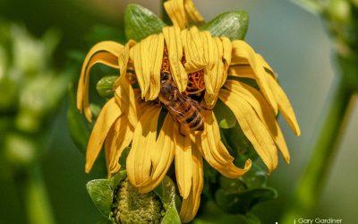 Wilted Wildflowers, Warm Nectar