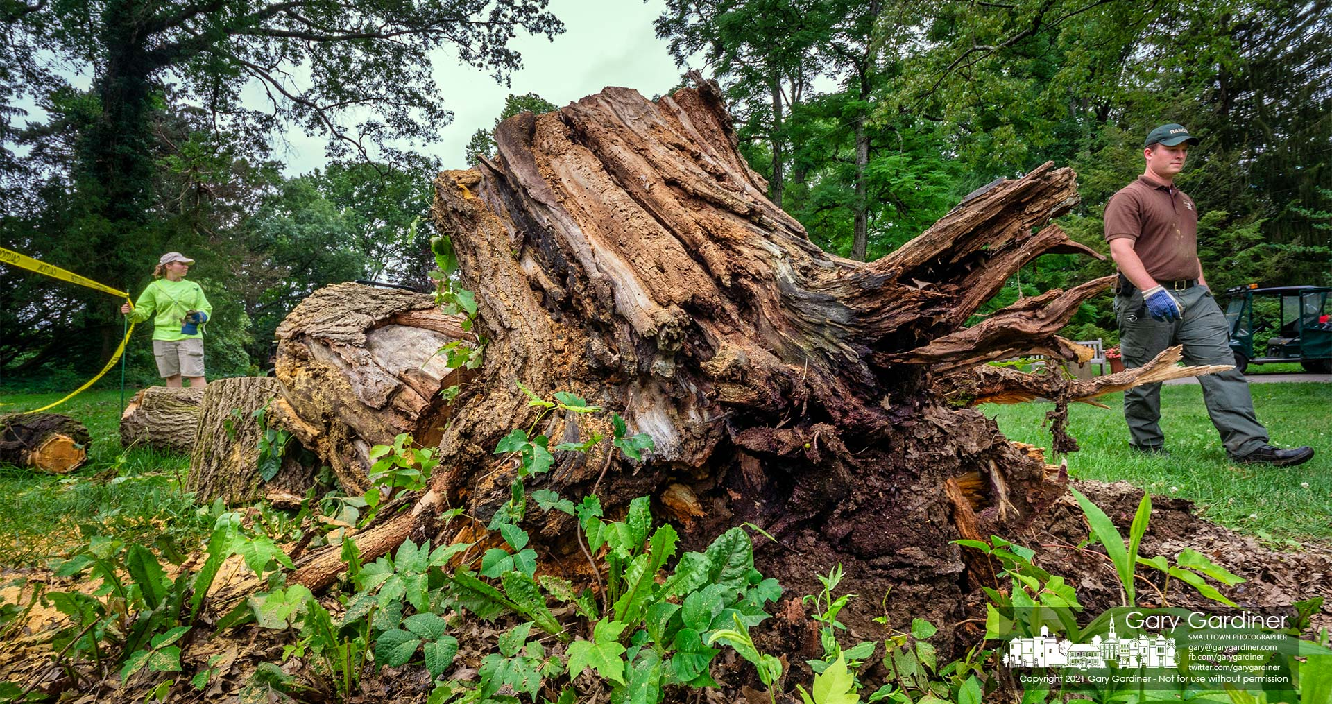 Workers clear debris from a mulberry tree after it fell and was cut into sections on greenspace at Inniswood Metro Gardens. My Final Photo for July 17, 2021.