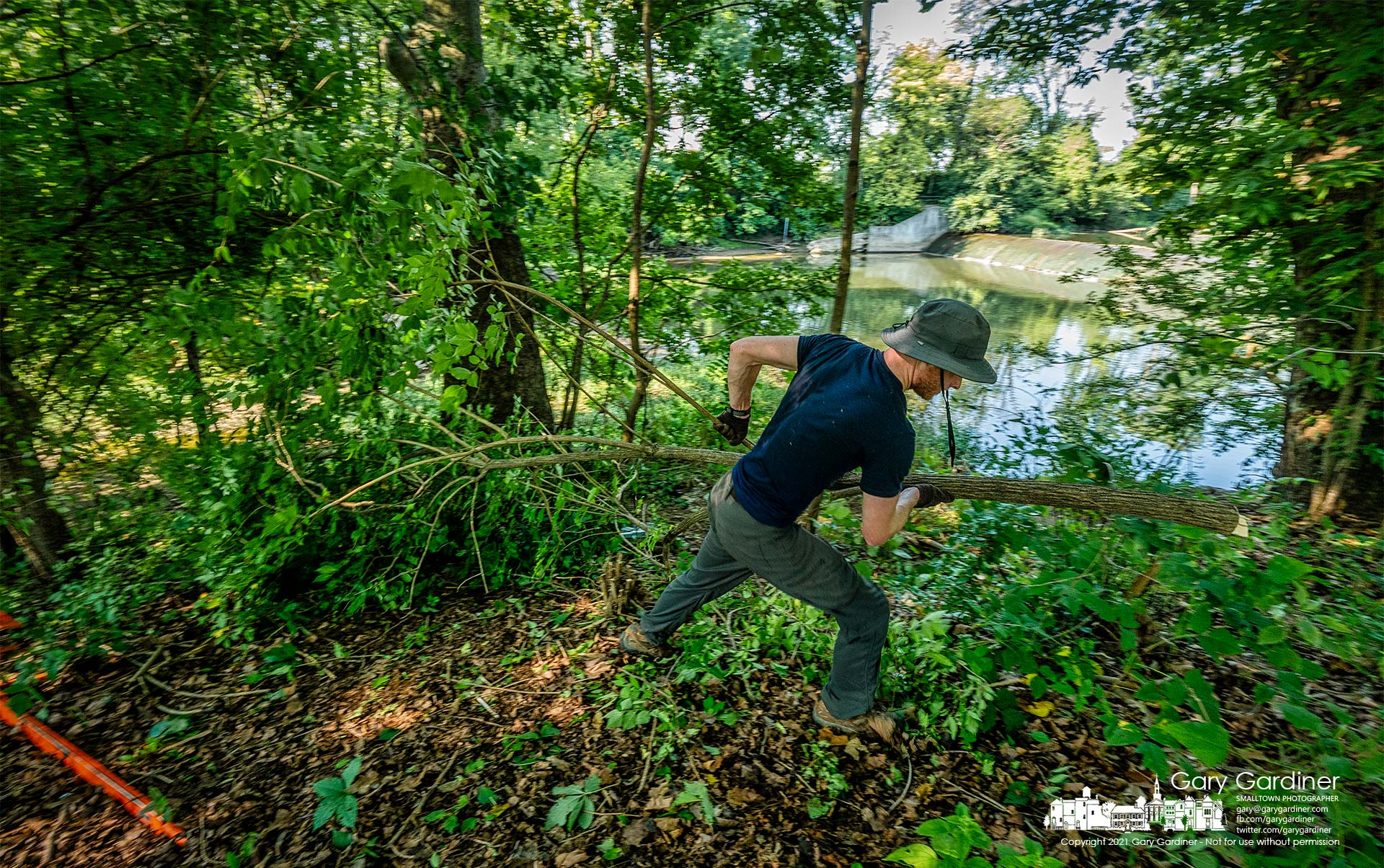A volunteer removes honeysuckle cut from the banks of Alum Creek just below the dam at Alum Creek Park North during a program Saturday to remove invasive species from the creek. My Final Photo for Aug. 21. 2021.