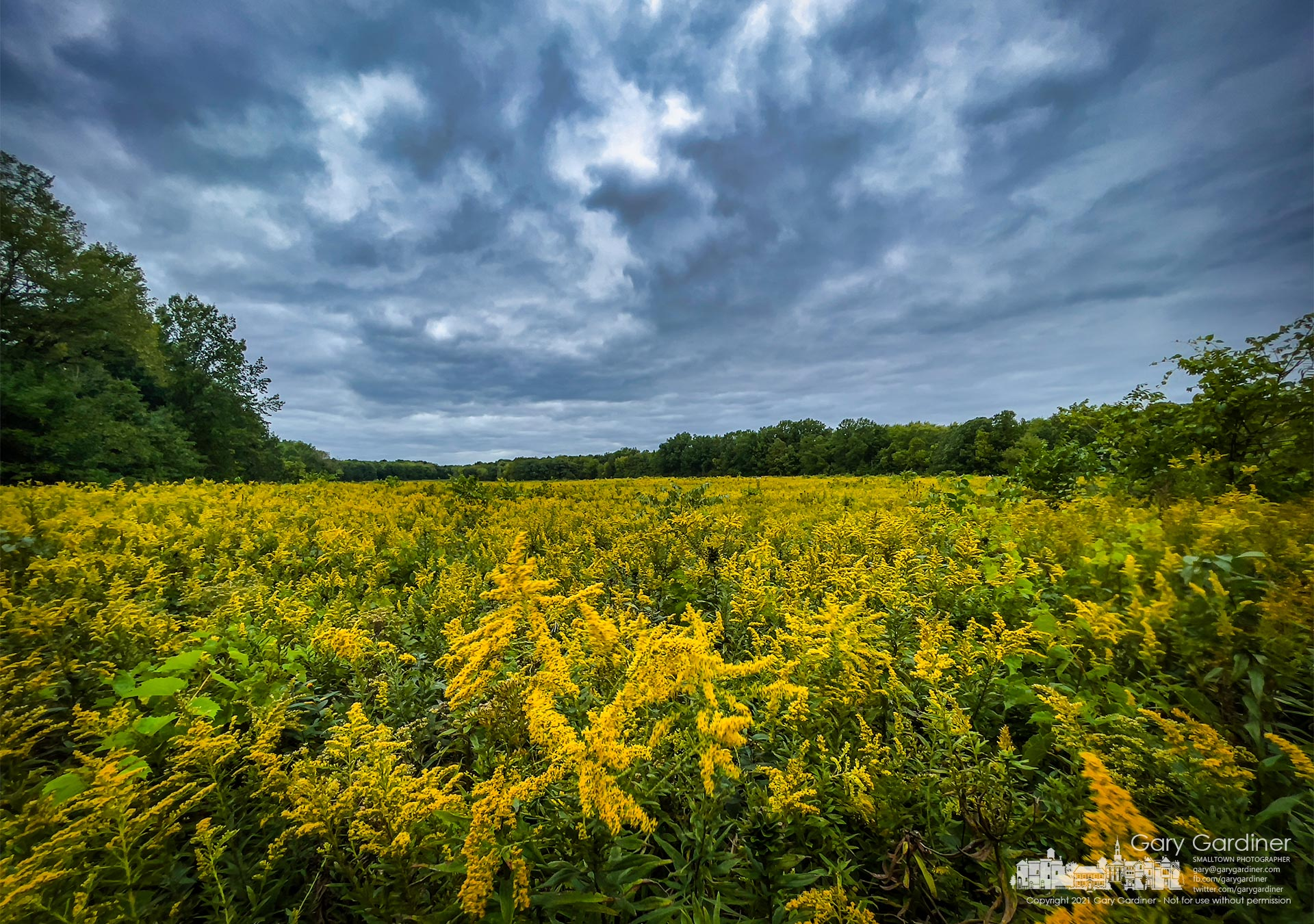 Goldenrod bursts into color under storm clouds blowing over the prairie at the edge of the Edward S. Thomas Nature Preserve in Sharon Woods Metro Park. My Final Photo for Sept. 23, 2021.
