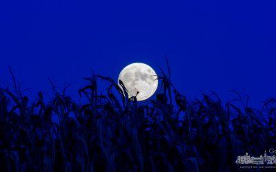 Full Moon Over Corn Field